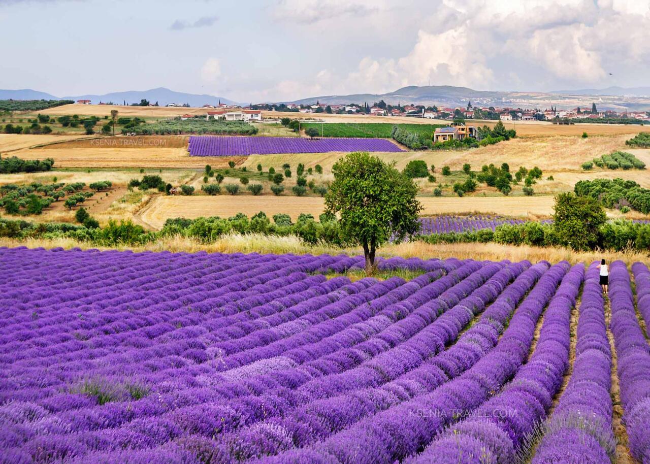 Фототур к лавандовым полям Халкидики, Греция