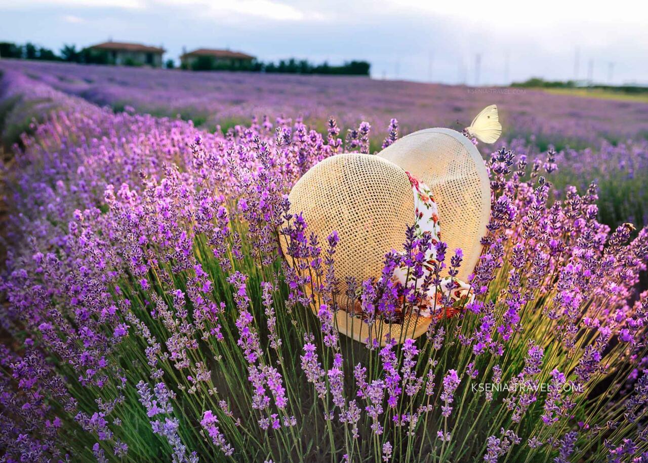 фототур Лавандовые поля Халкидики, Греция