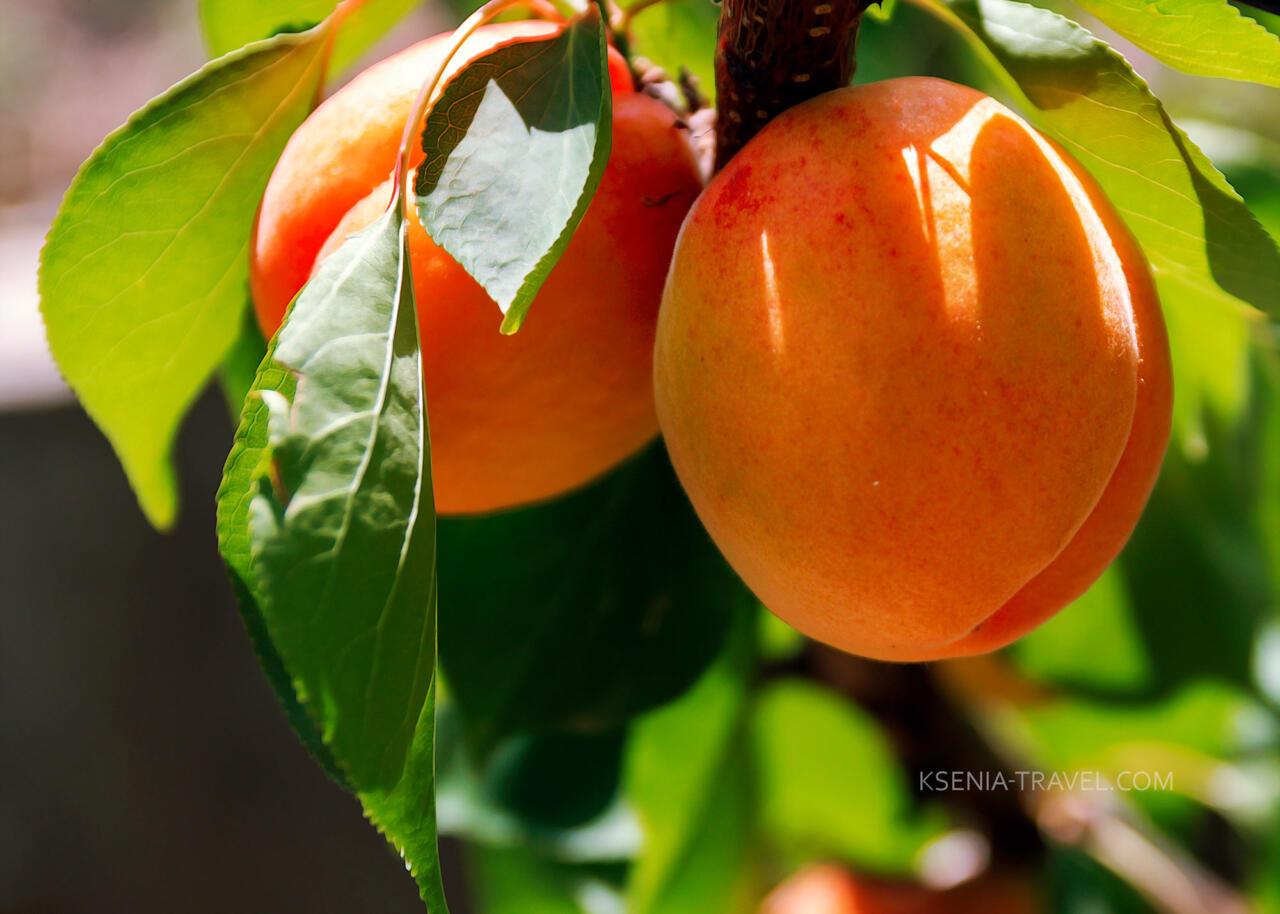 фрукты Греция